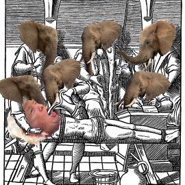 """Trump O-Ton: """"Waterboarding is okay"""" - Hier rächen sich die Elefanten an Trump, die er zum Abschuß freigegeben hat."""